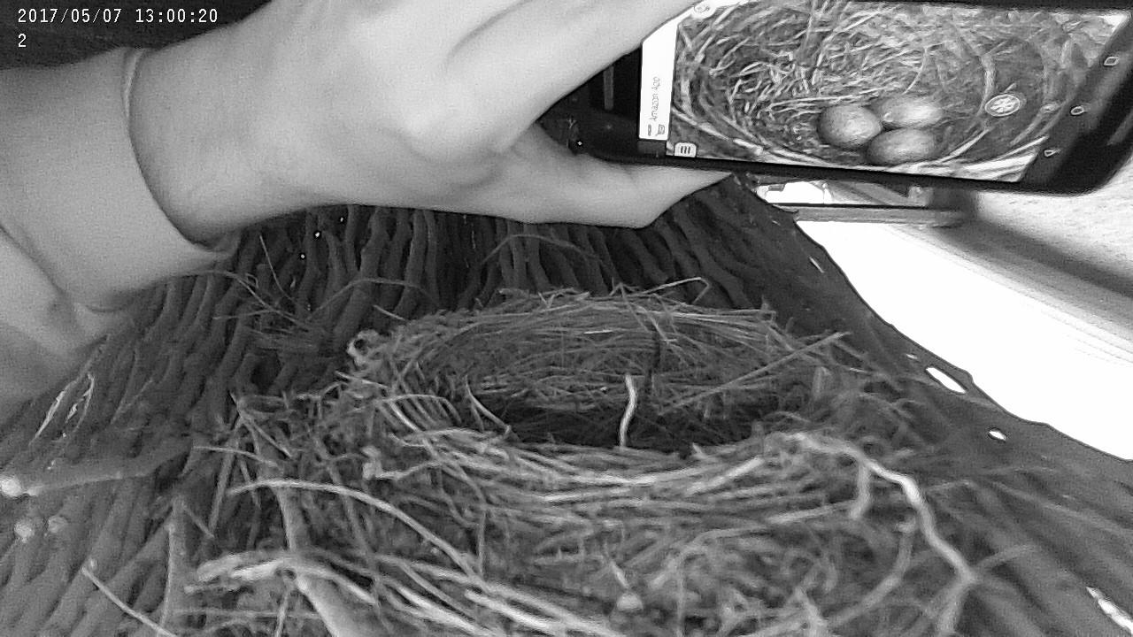 kommen meisen zurück ins nest